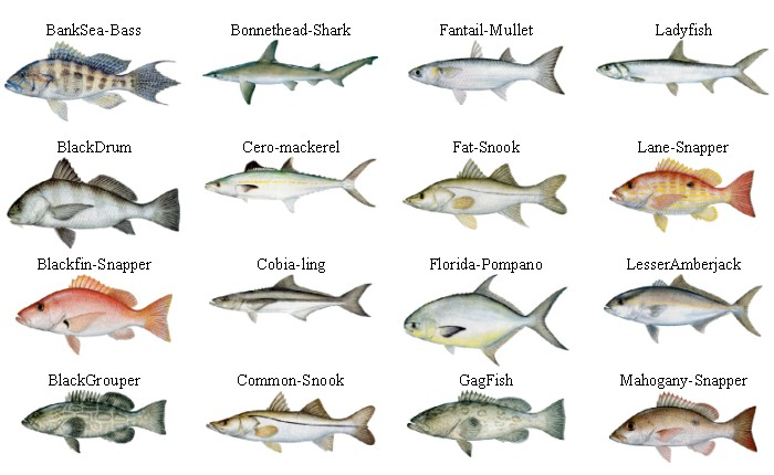 Types Of Fishes To Eat